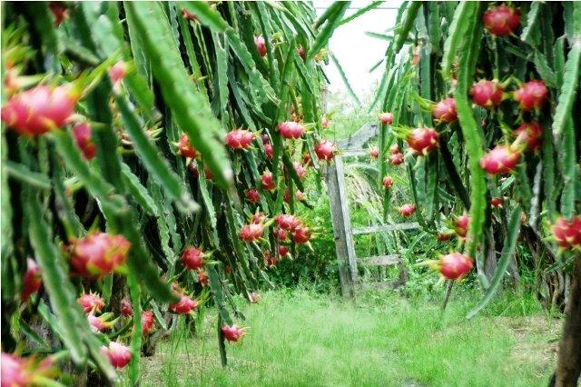 nông nghiệp công nghệ cao bắc bình